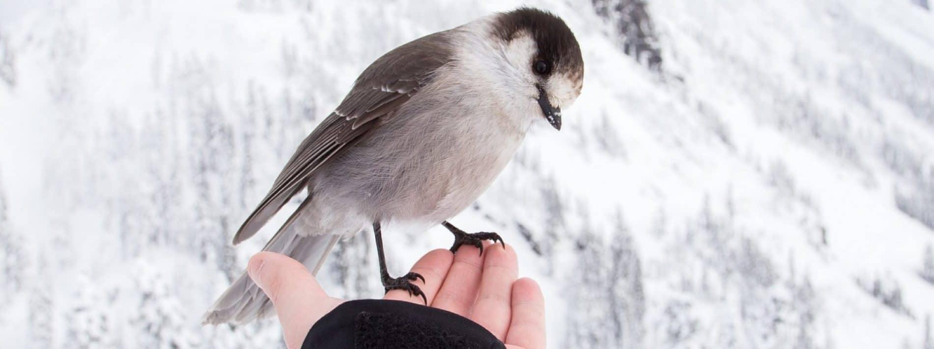 oiseau LPO cidou