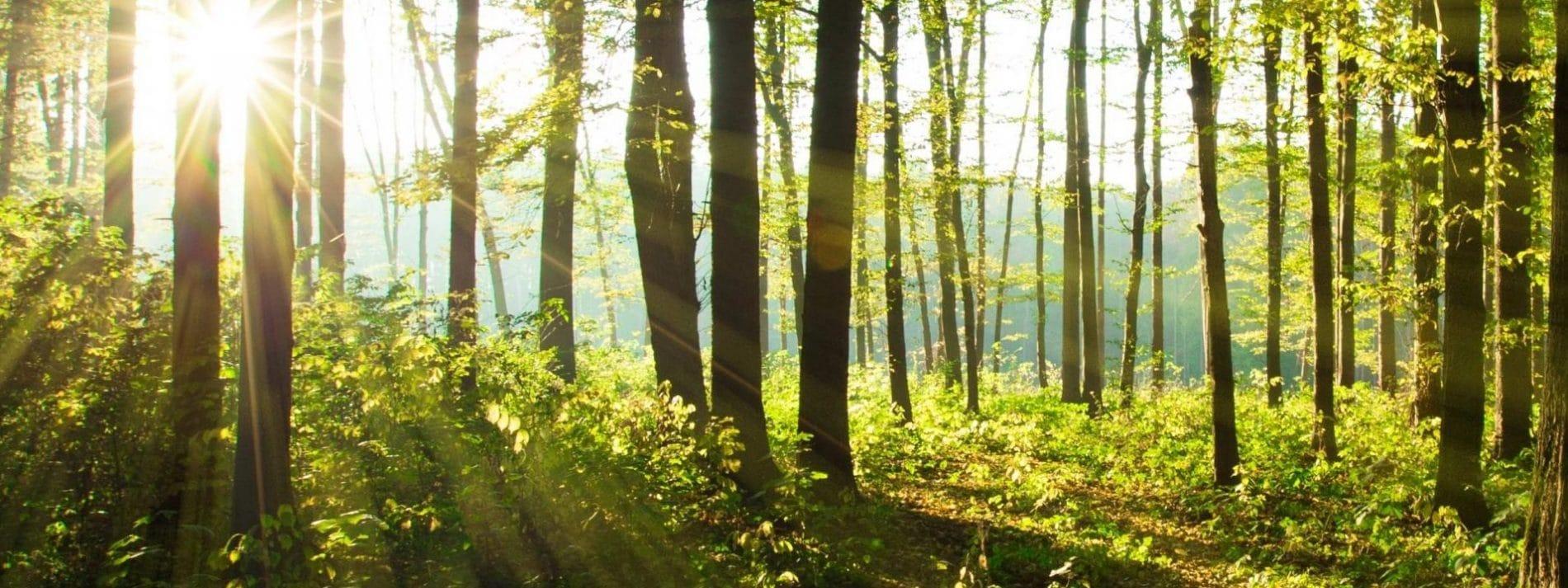 biodiversité nature foret cidou